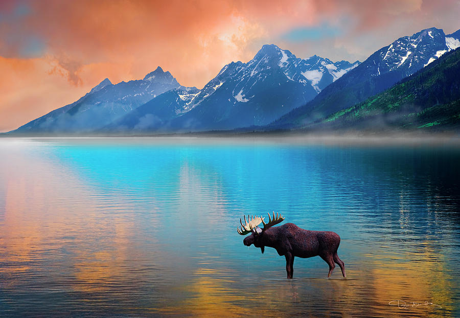Moose In Lake With Grand Tetons In Background Photograph by Dan Barba 900x622