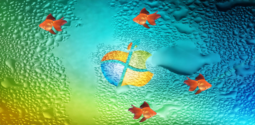 Moving Veiltail Goldfish Wallpaper Pictures Download 817x400