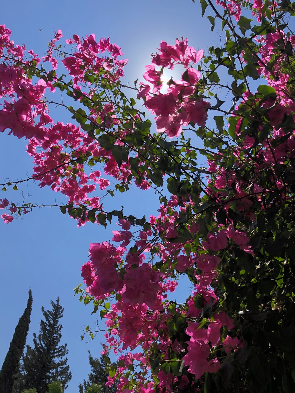 Kinneret Israel Pictures Download Images on Unsplash 1000x1333