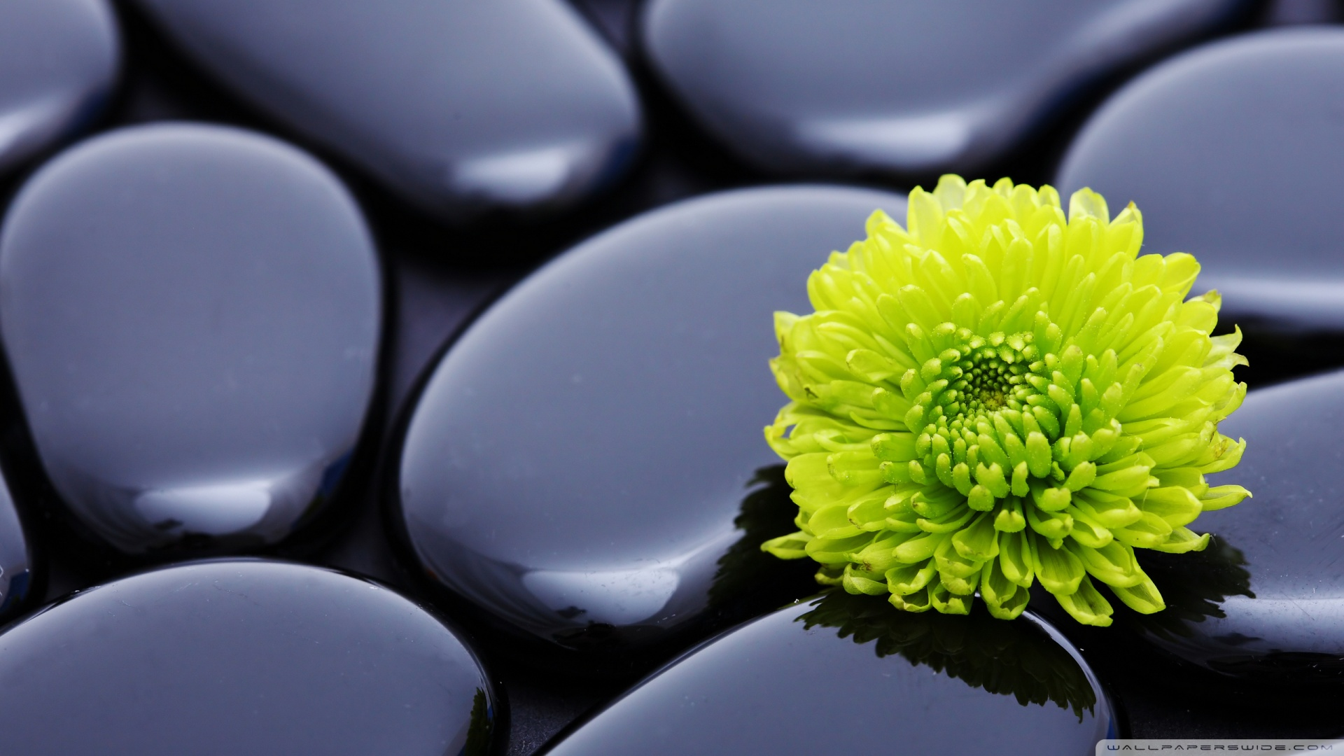 Black Zen Stones And A Yellow Mum Wallpaper 1920x1080 Black Zen 1920x1080