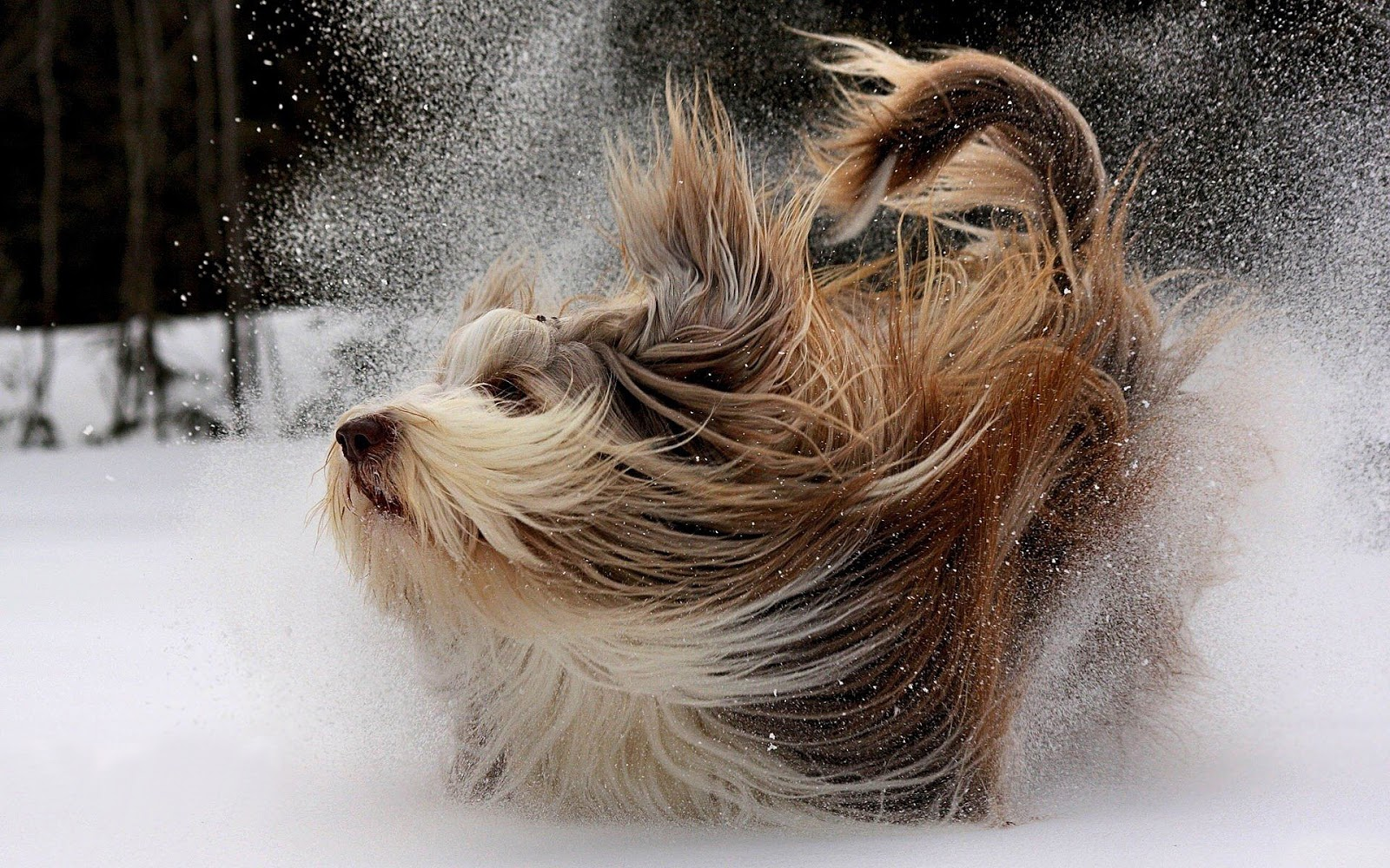wallpaper with a cute dog playing in the snow HD winter wallpaper 1600x1000