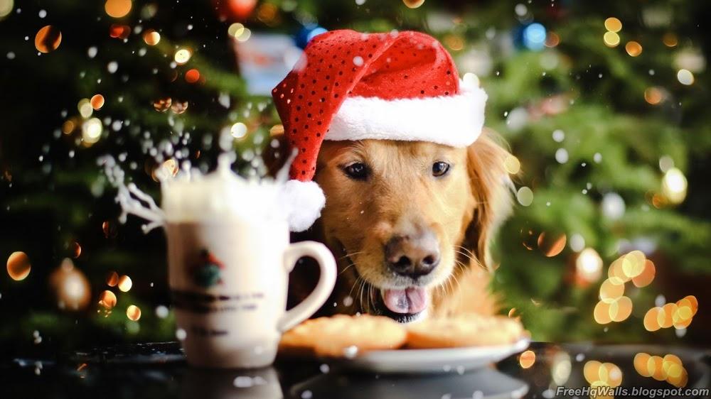 Beautiful Christmas Dog Wallpaper HD Wallpapers 1000x562