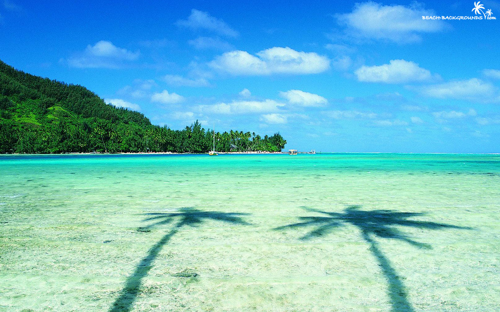 Wallpaper Sea Beach Two Palms   funny pictures funny images 1680x1050