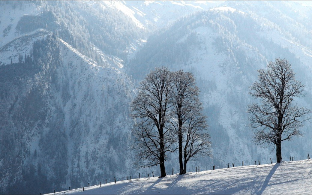 Trees Hoarfrost Descent Protection Silence Mountains   Stock 1040x650