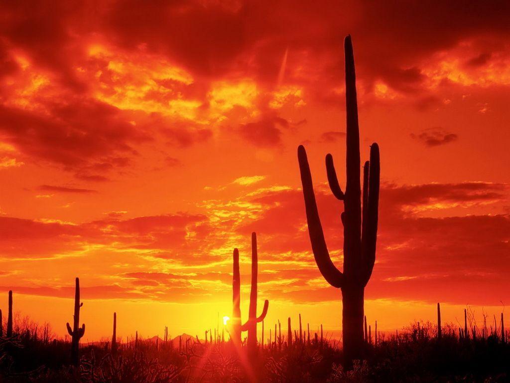 Arizona Desert Wallpapers   Top Arizona Desert Backgrounds 1024x768