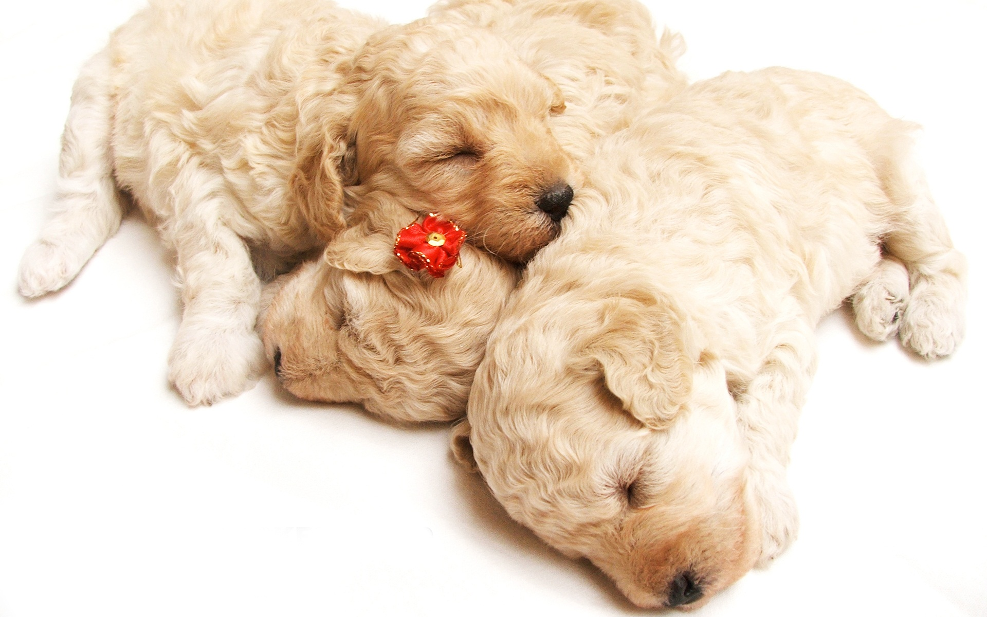 Cute Sleeping Puppies Wallpapers HD Wallpapers 1920x1200