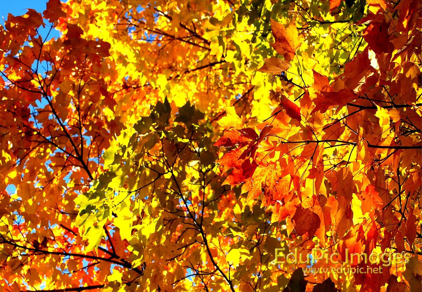 ... fall colors desktop 640 x 425 262 kb jpeg spots for fall colors 4000