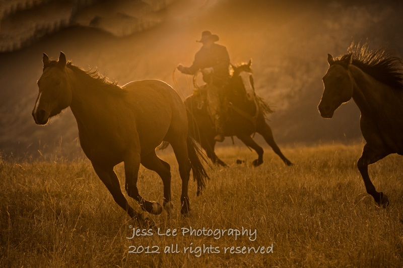 cowboys horses wild nature widescreen background picture wallpaper 800x532