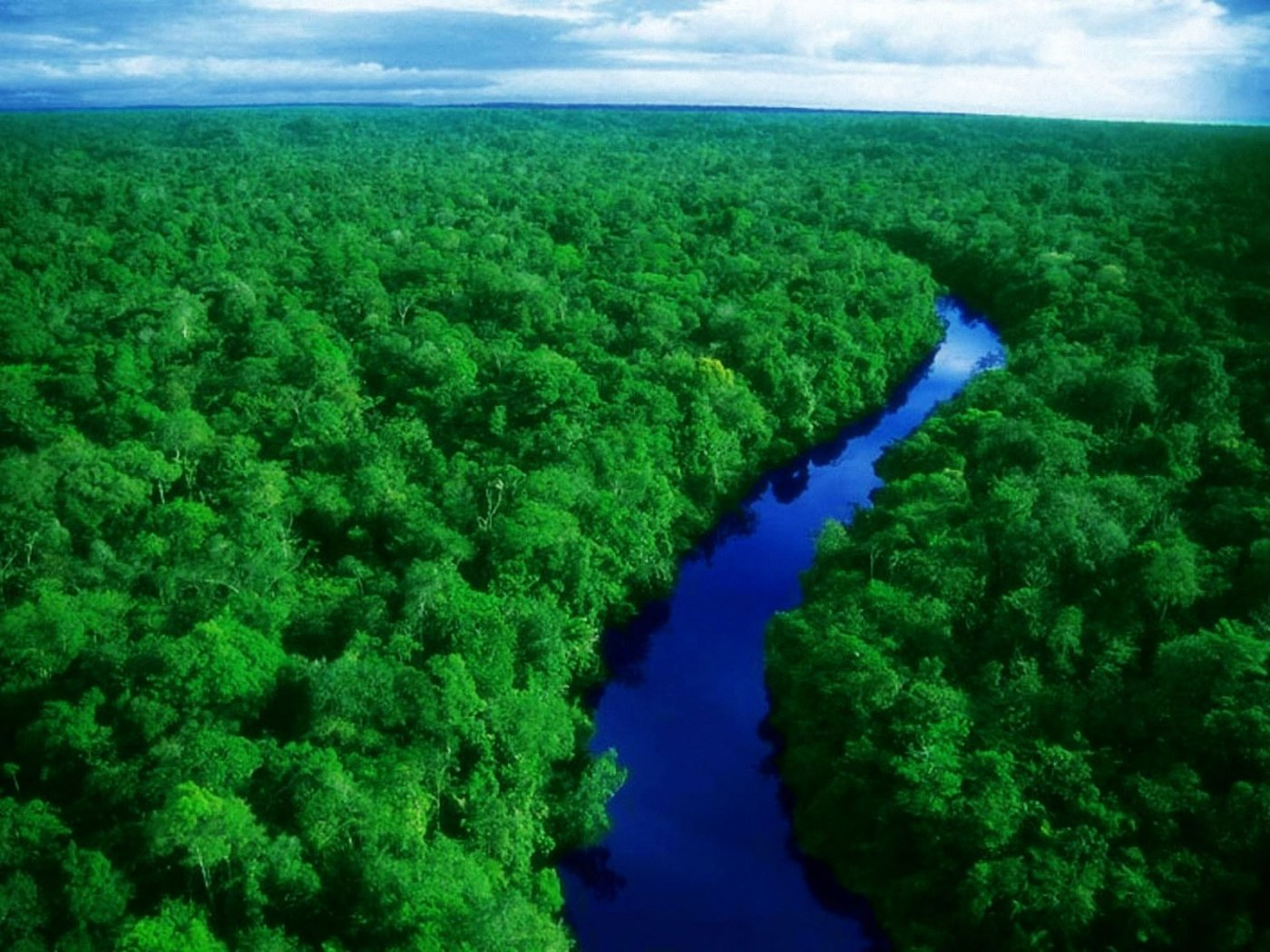 Amazon Forest 1400x1050 WallpapersAmazon Forest 1400x1050 Wallpapers 1400x1050