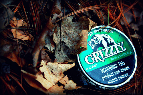 grizzly chew wintergreen 500x333