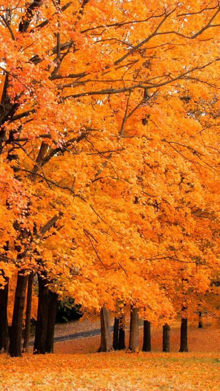 Autumn maple leaves iPhone 6 Wallpapers HD iPhone 6 Wallpaper 750x1334