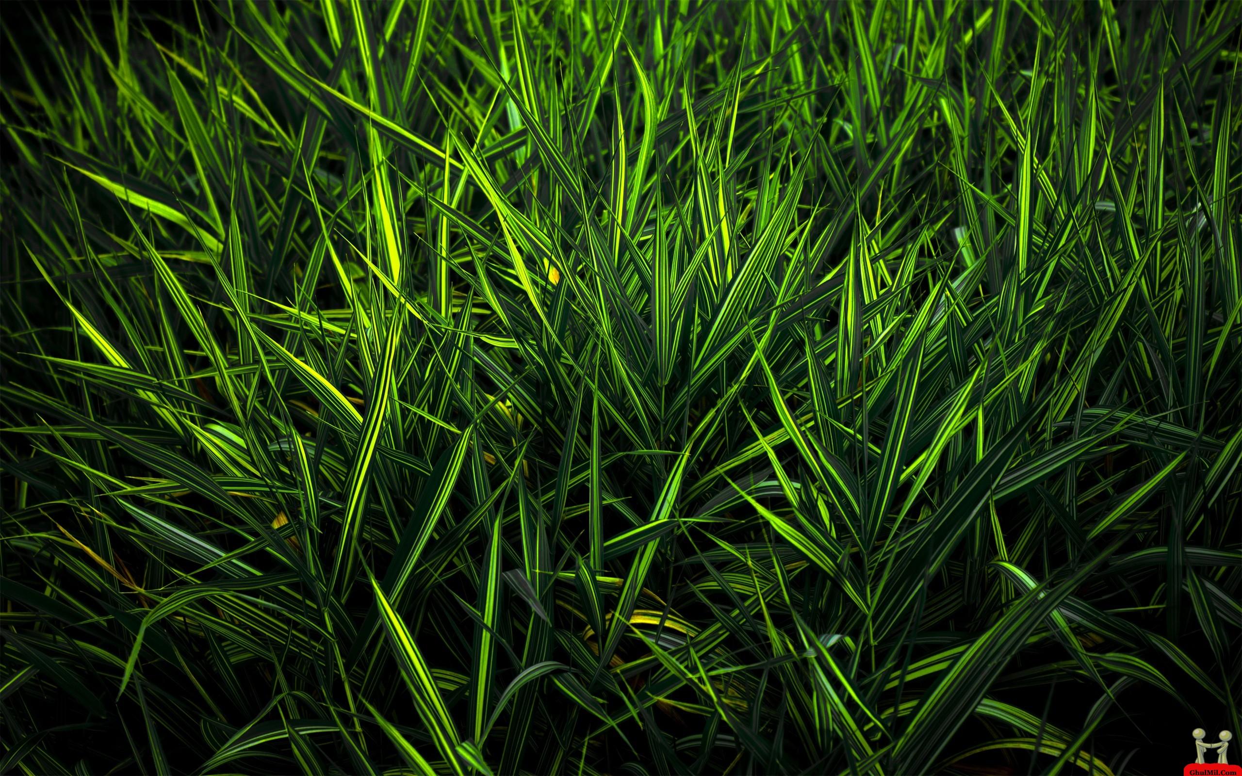 Hd wallpaper green - Pure Green Nature Spike Hd Wallpaper Hd Wallpapers Free Download