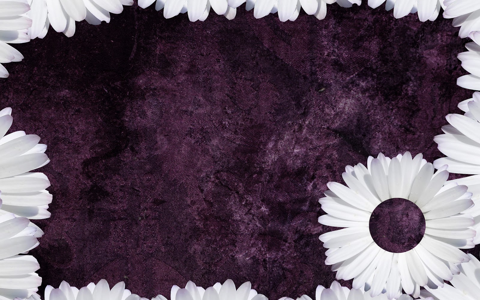 Purple Daisy Tumblr Backgrounds   ibjennyjenny Photography and 1600x1000