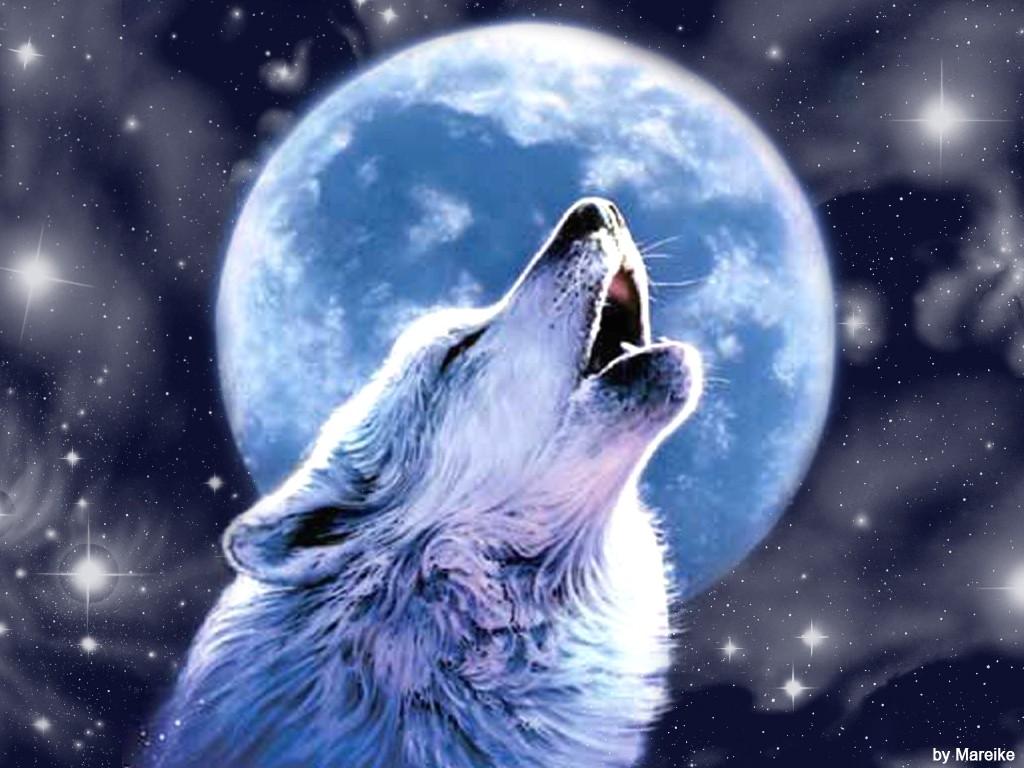 Wolf howling at the moon wallpaper wallpapersafari - Wolf howling hd ...
