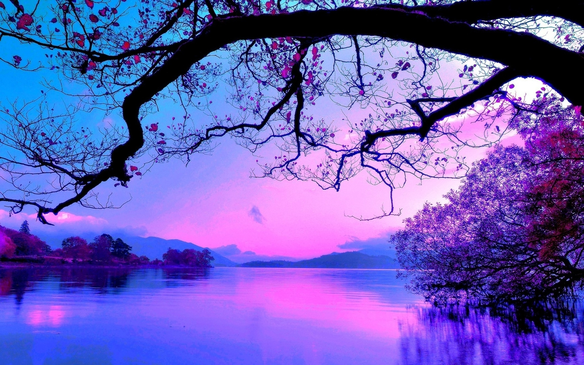 purple sunset 8782 1920x1200 wallpaper 1920x1200