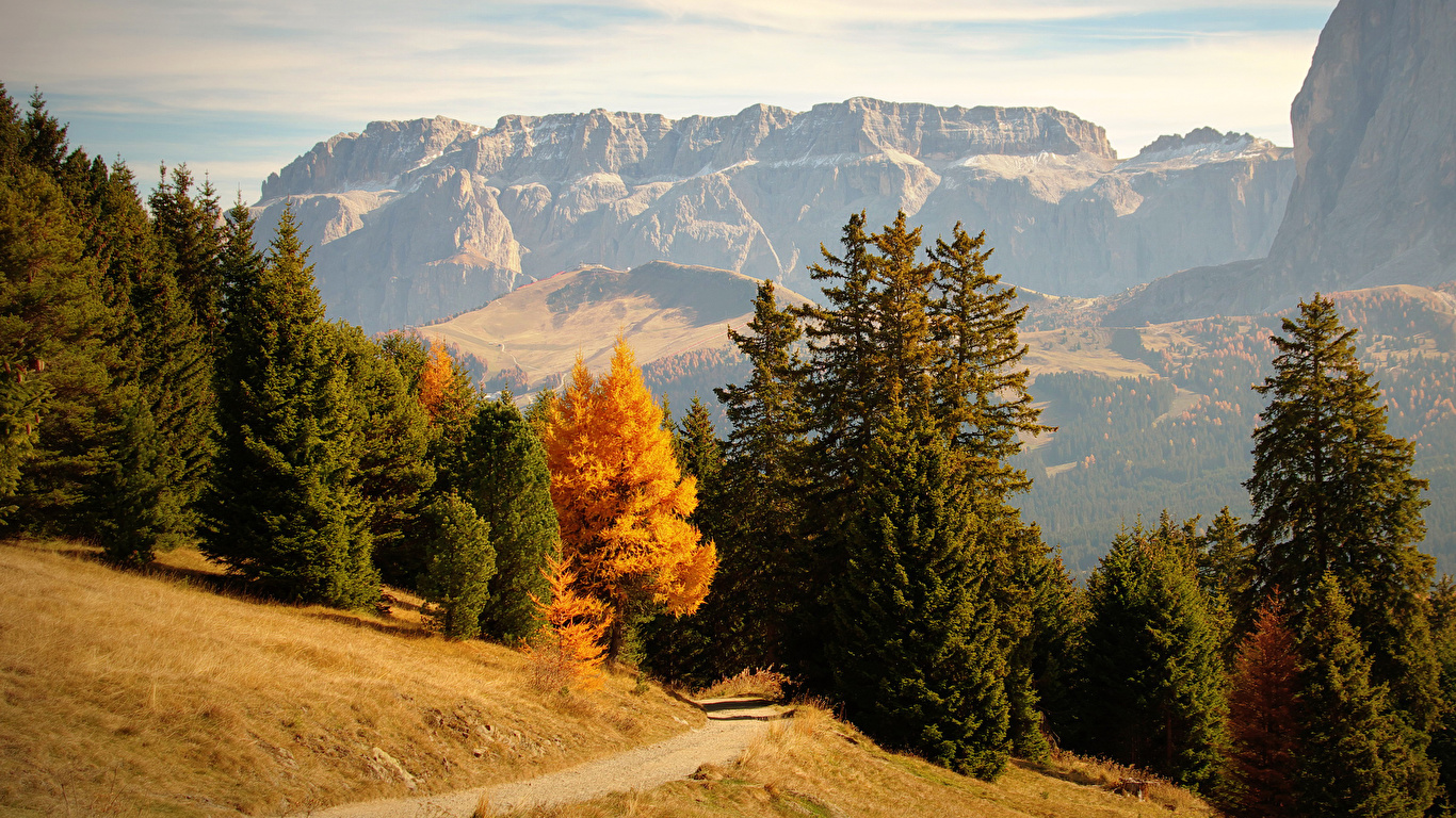 Images Italy Bolzano Trail Nature Spruce Autumn Mountains 1366x768 1366x768