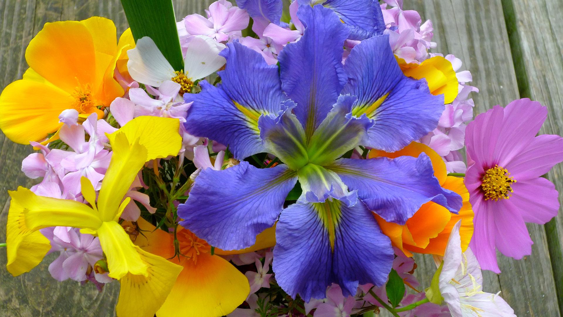 Spring Flowers Widescreen 1396   HD Desktop Wallpaper HD 1920x1080