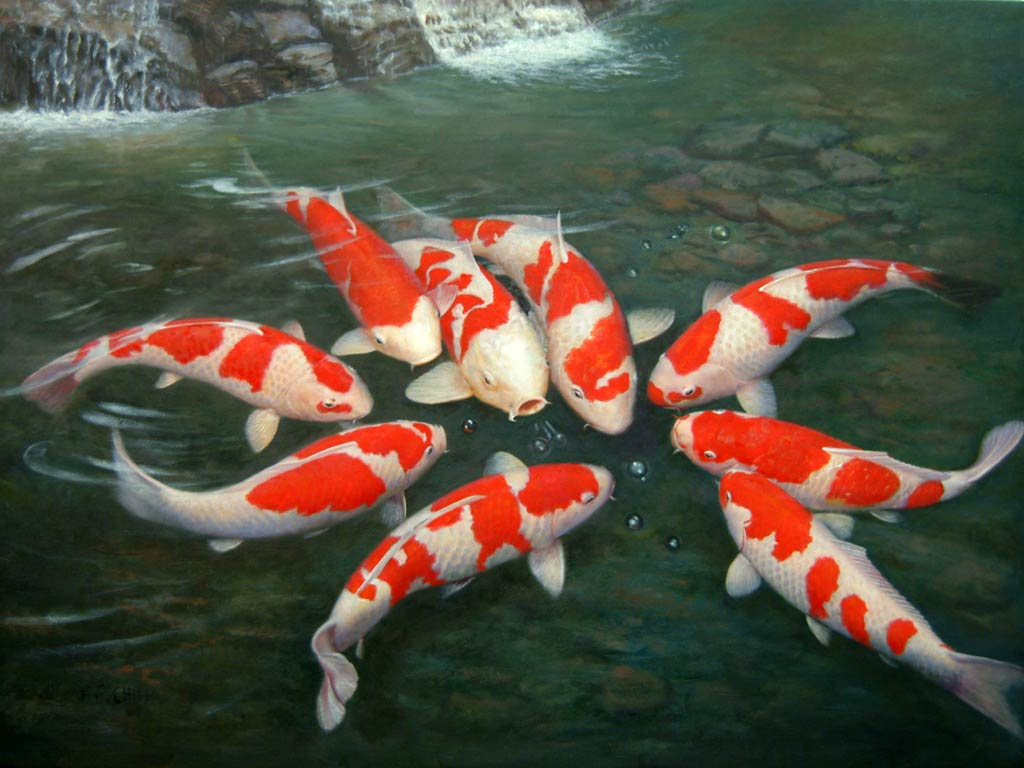 Koi Fish Live Wallpaper loopelecom 1024x768