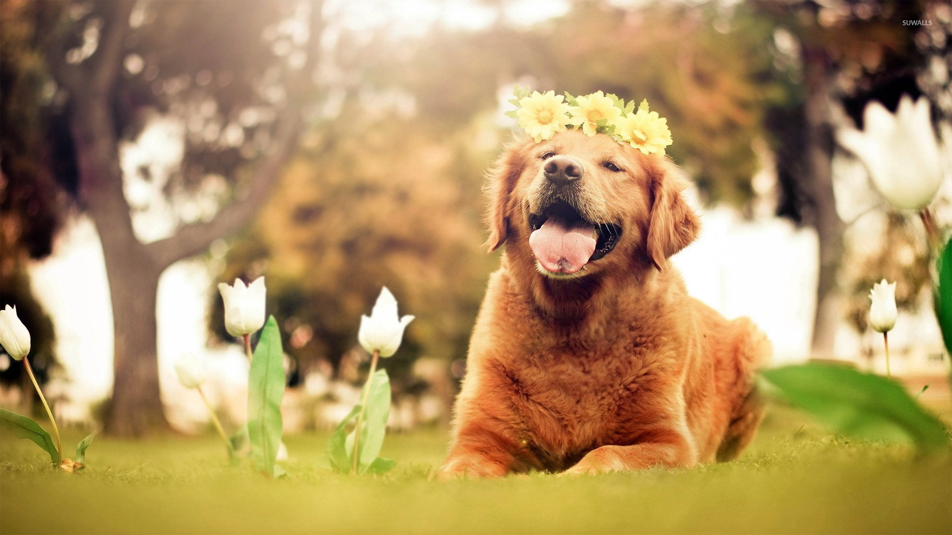 47 Easter Golden Retriever Wallpapers On Wallpapersafari