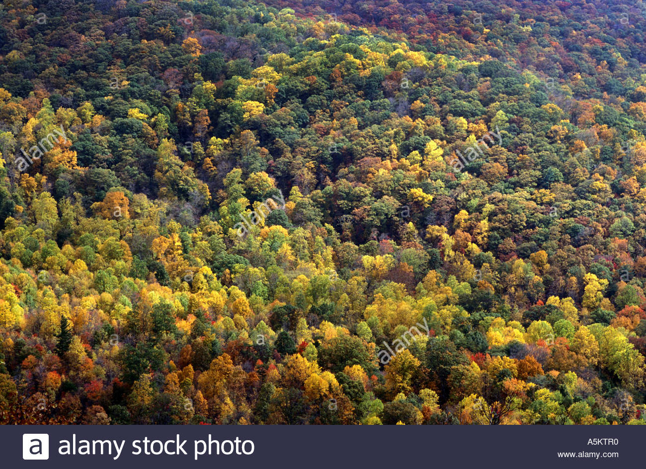 A background of autumn colored trees from the fall in Asheville NC 1300x945