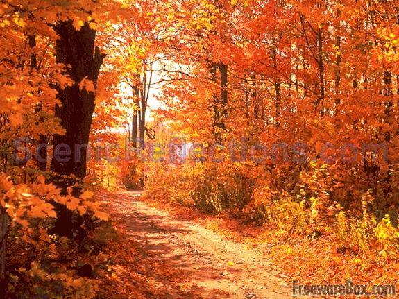 Colors of Autumn Screensaver freeware screenshot   Screensavers 575x431