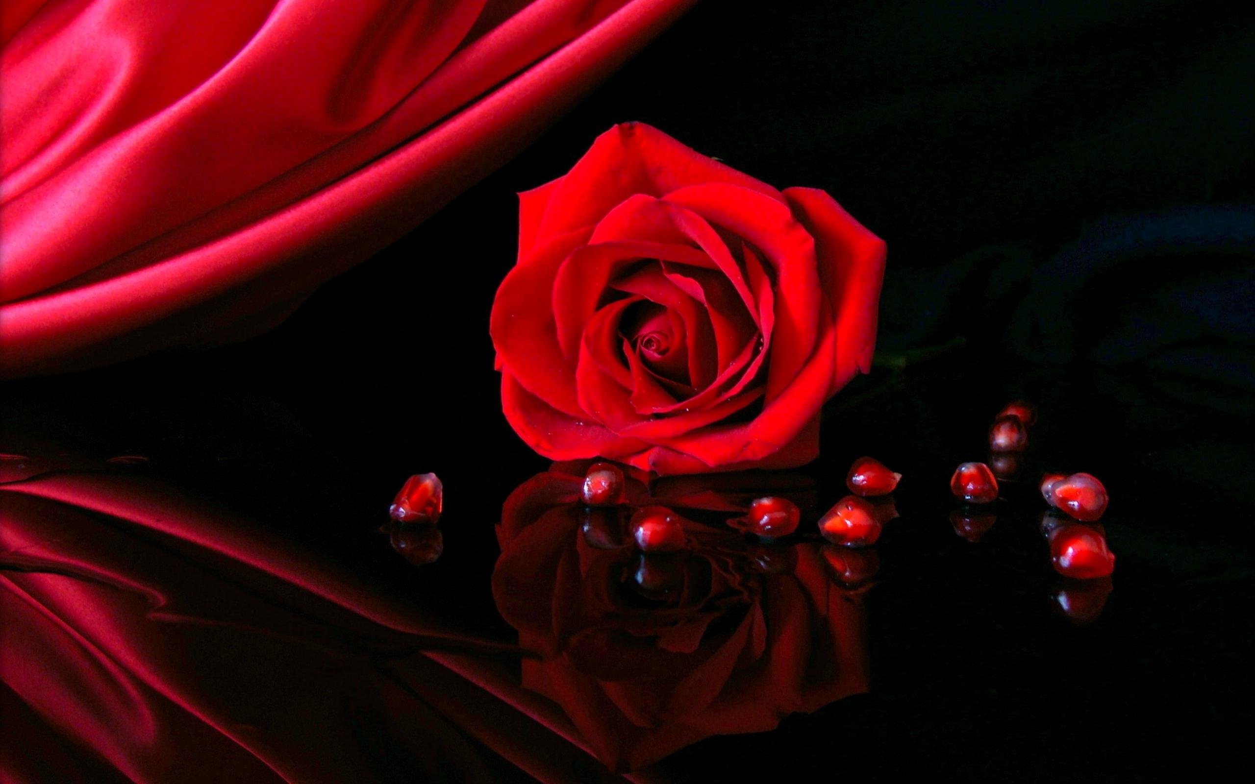 83 Red Rose Black Background On Wallpapersafari