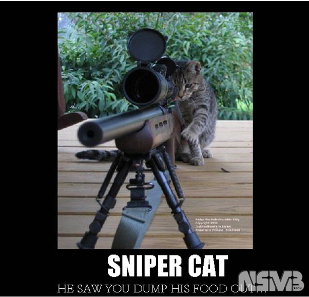 Sniper Cat Wallpaper Sniper cat by pokefan117 602x579