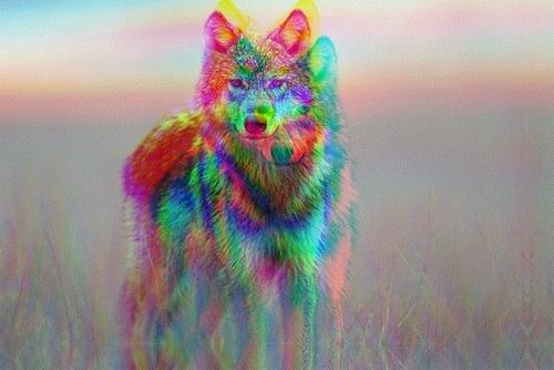 Wolf Hipster Indie Grunge 3D Wild Ninjaturtlesx 500x334
