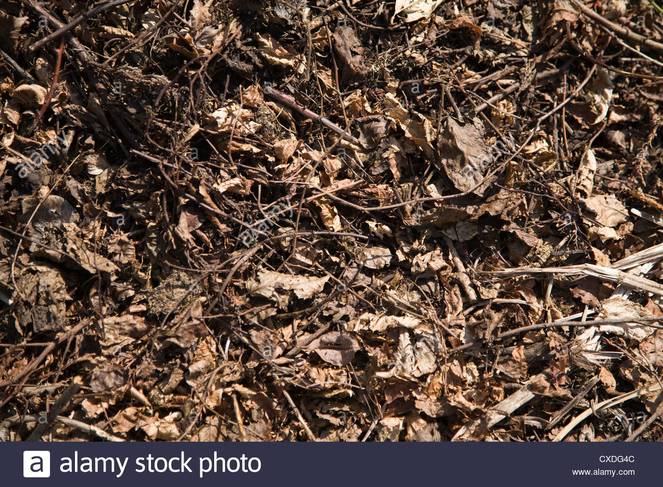twigs and dead leaves on the ground background texture Stock Photo 1300x956