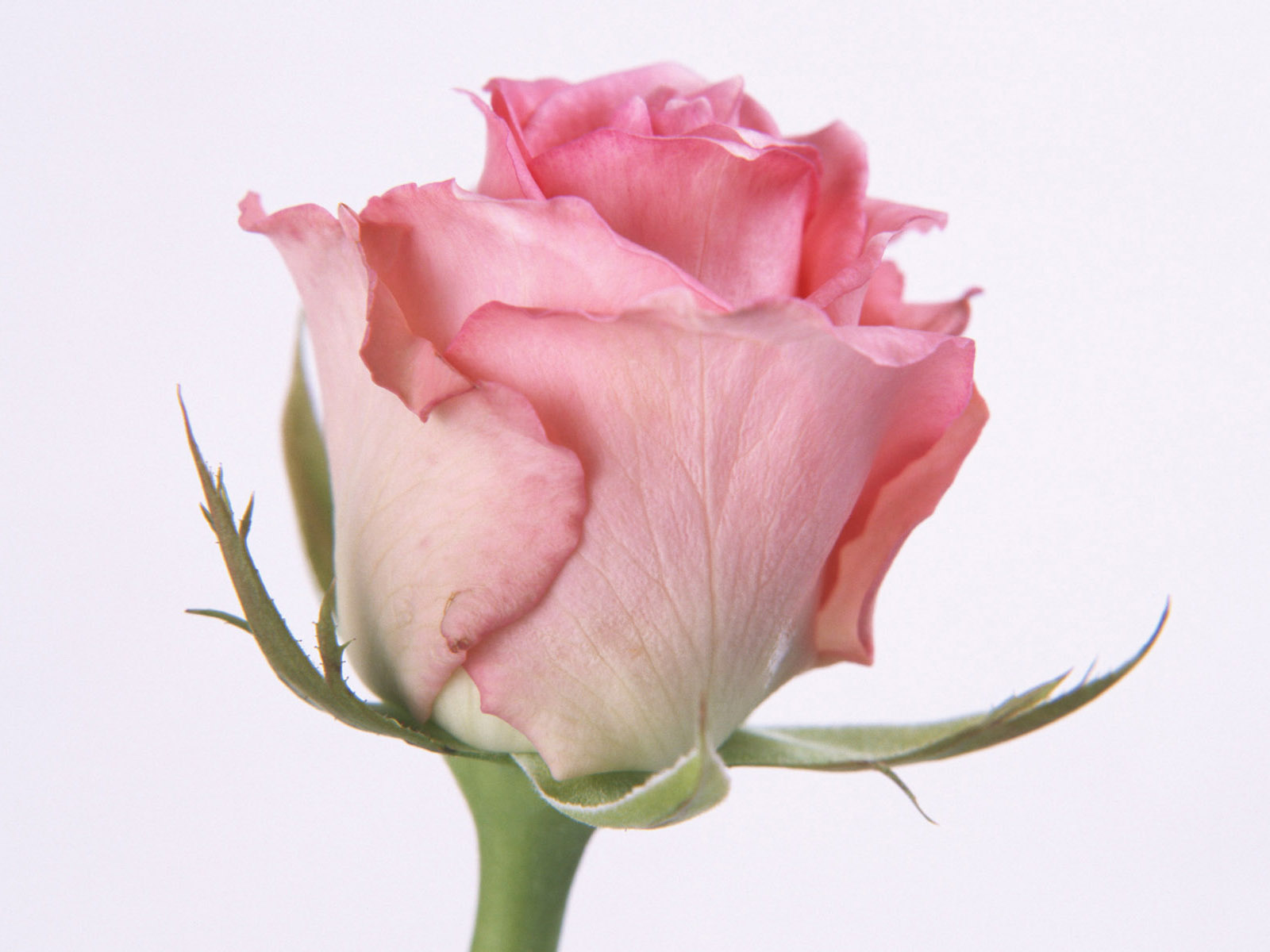 Beautiful Flowers Pictures Beautiful Flowers Wallpapers Pink Roses 1600x1200