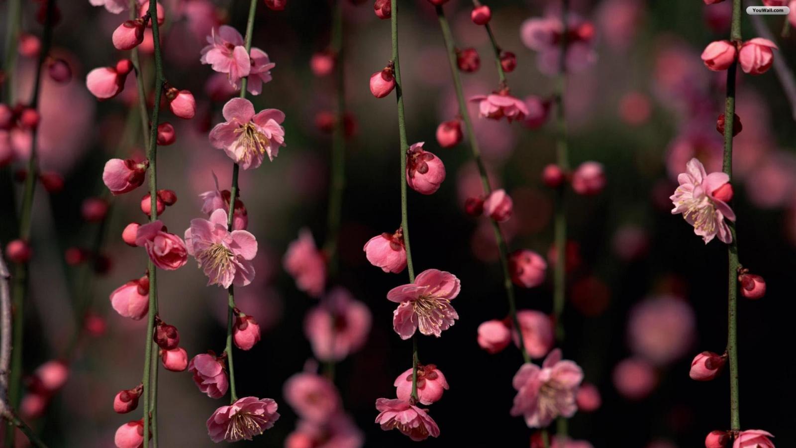 Spring Flowers Wallpaper   wallpaperwallpapersfree wallpaper 1600x900