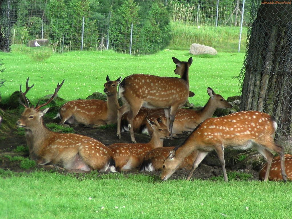 Deer Wallpapers Images and animals Deer pictures 647 1024x768