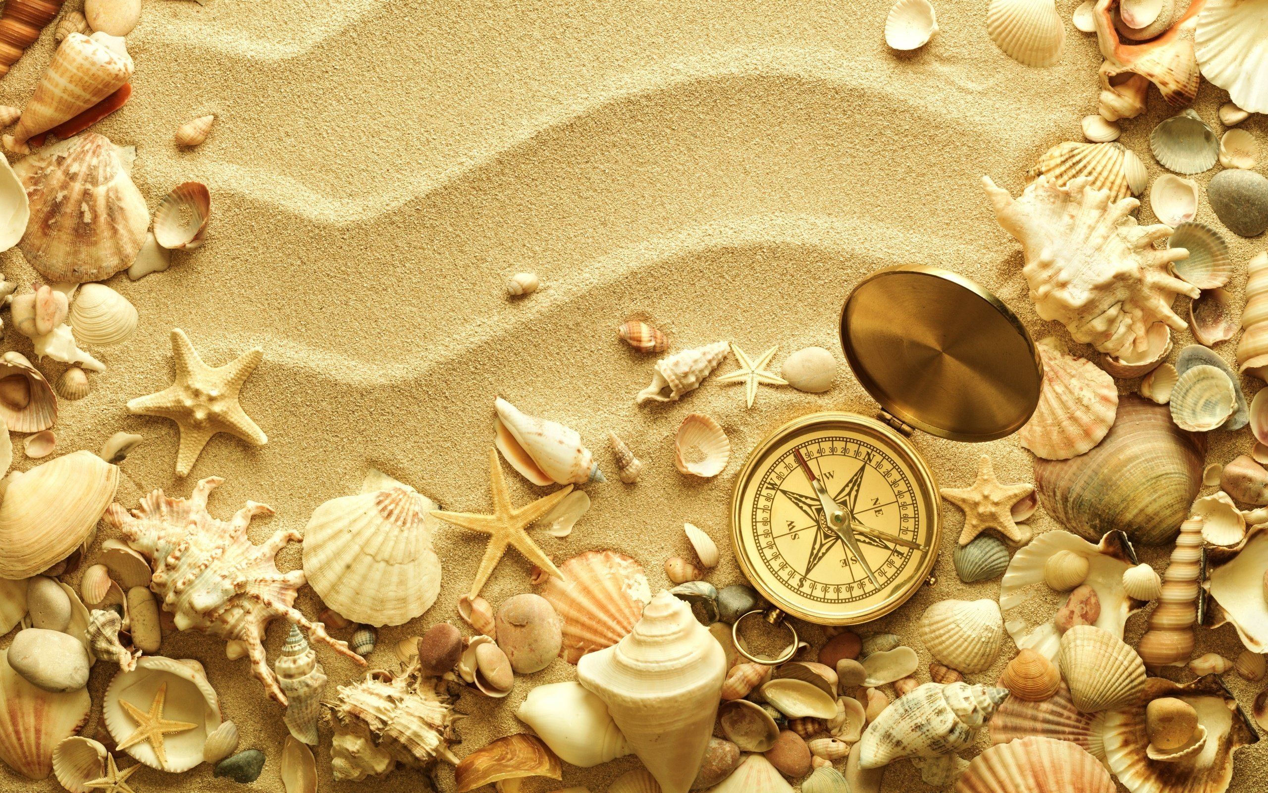 Ocean Sand Shells HD Wallpaper Background Images 2560x1600