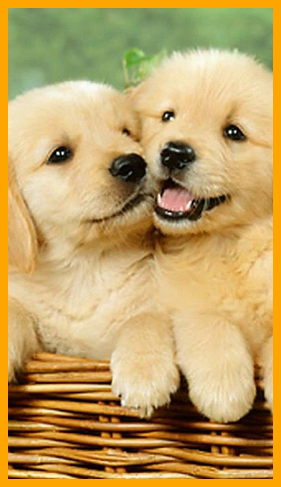 74 Cute Dog Wallpapers on WallpaperPlay 1144x1984