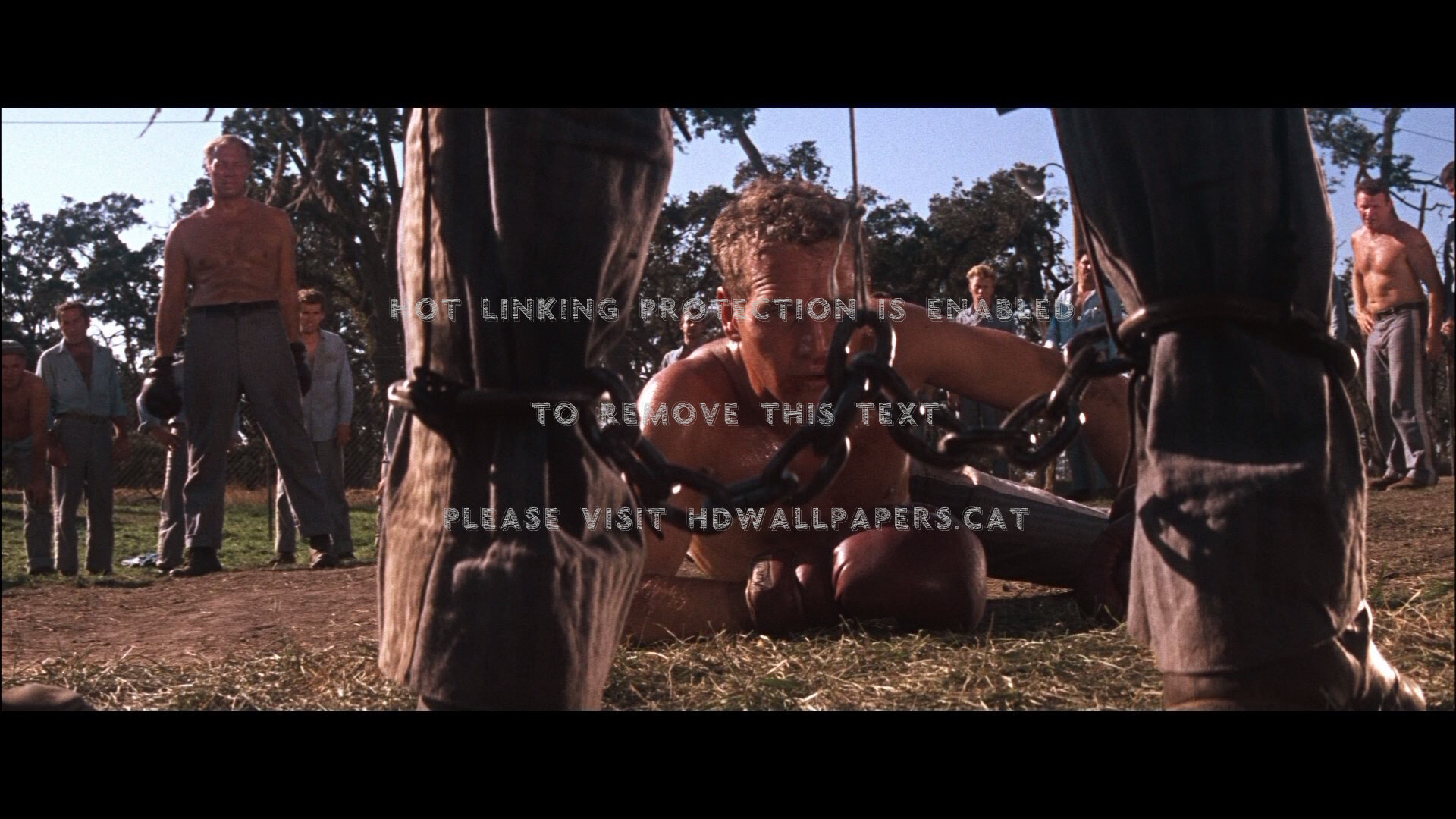 cool hand luke 2 paul newman entertainment 1920x1080