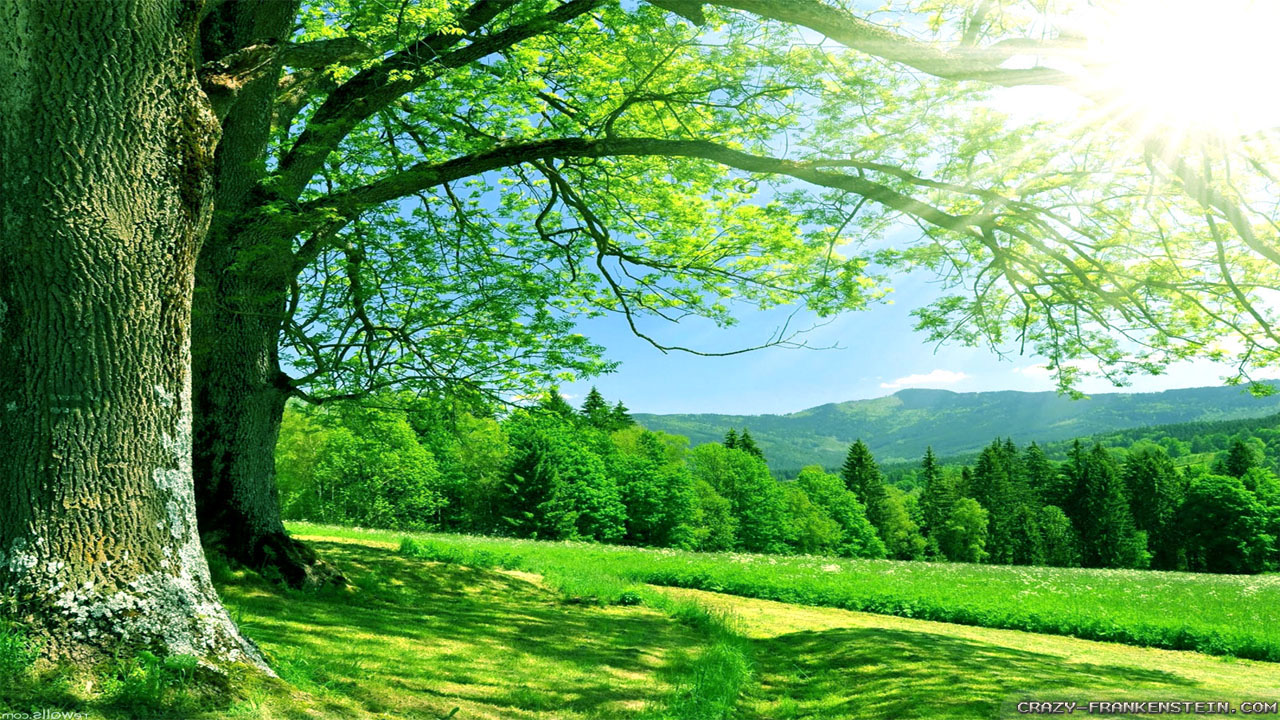 Summer Nature Wallpaper 1280x720