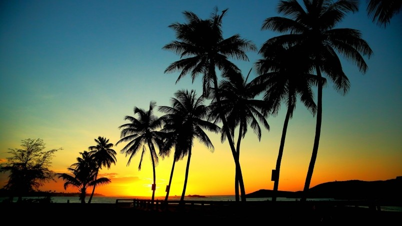 location Home Nature Scenery Palm trees in sunset wallpaper 804x452