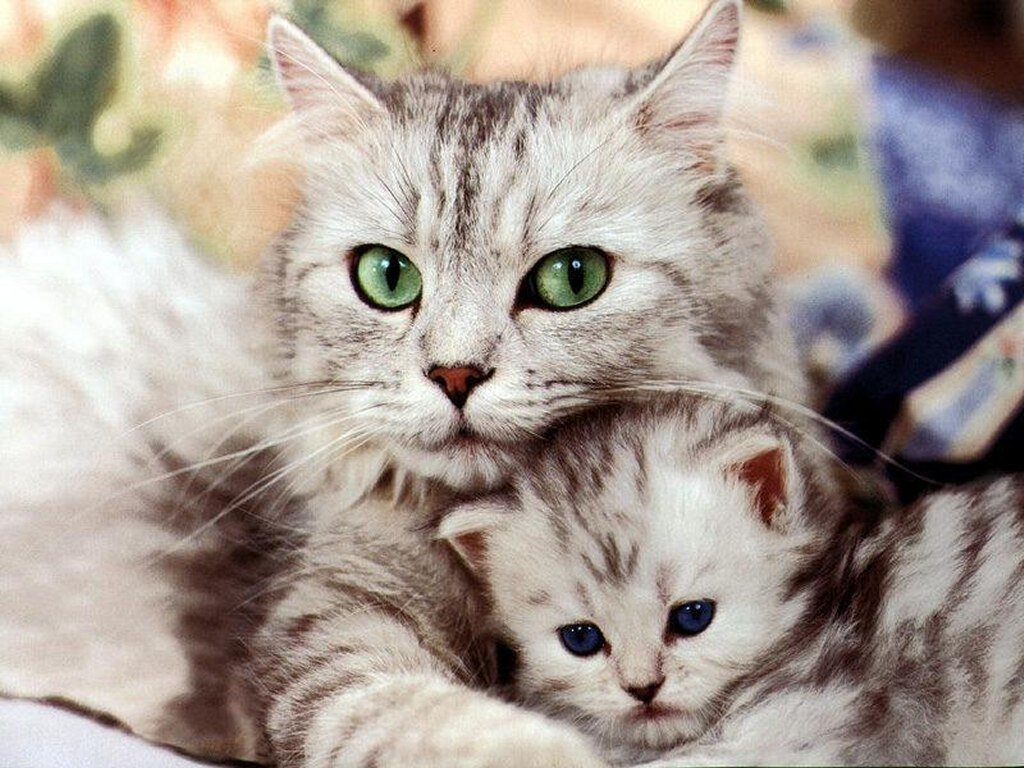 Silly Cat Pictures cute kittens 1024x768