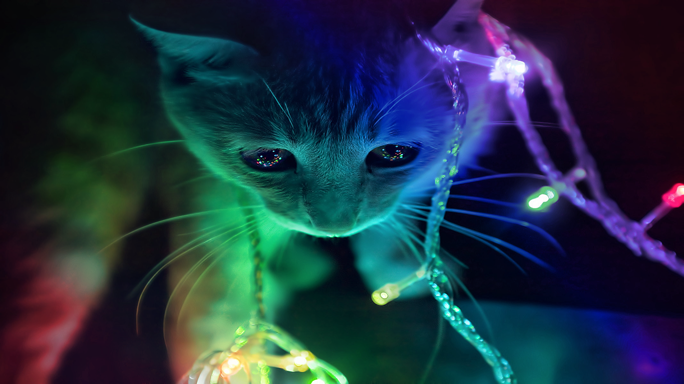 3D Cat Wallpaper For Computer
