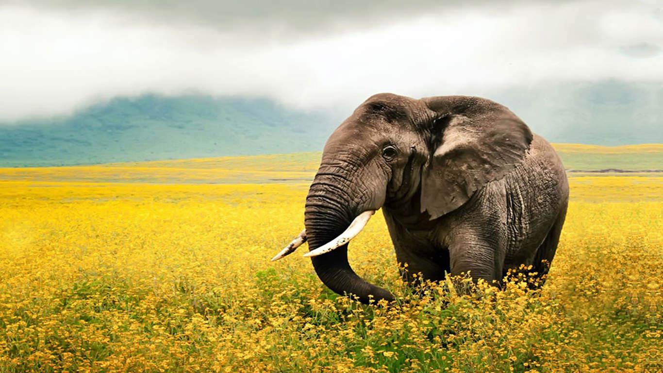 45 elephant wallpaper for desktop on wallpapersafari - Baby elephant wallpaper ...