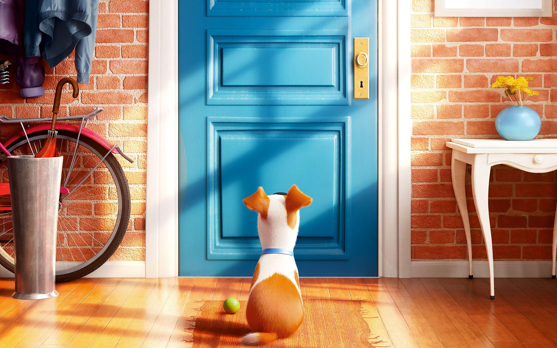 Secret Life Of Pets 2015 Disney Movies 26341 Wallpaper Wallpaper hd 2880x1800