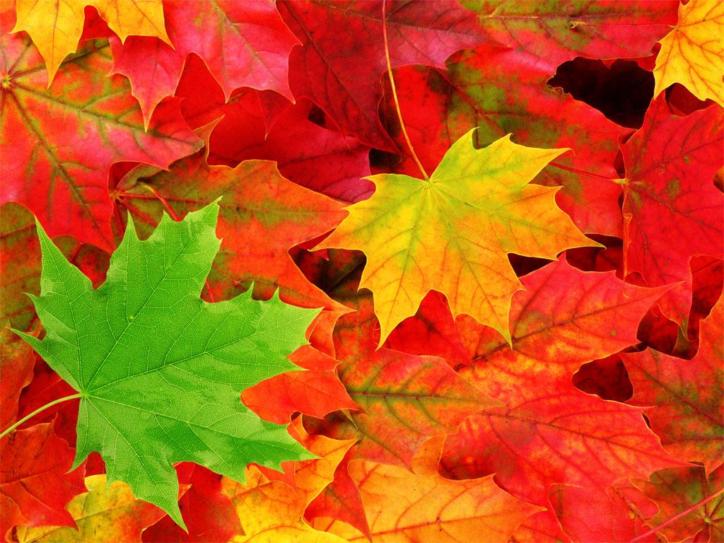Windows 7 Autumn Wallpapers Desktop Wallpaper 1024x768