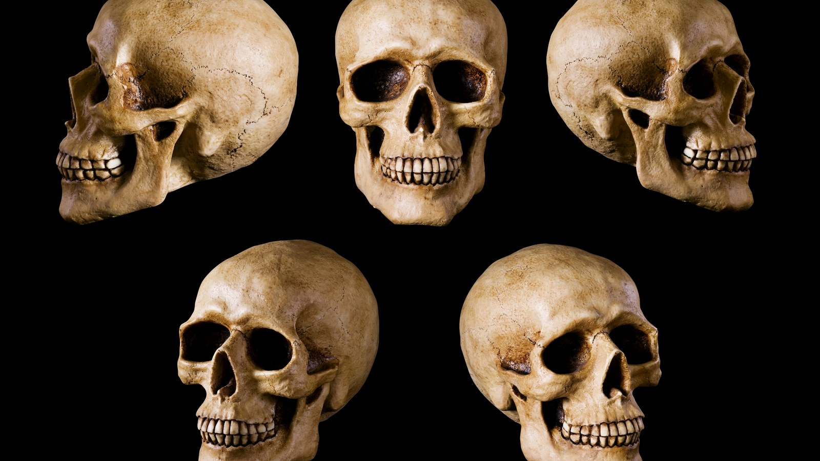 Head Skull Collections Photos | wallpapers55.com - Best Wallpapers for ...