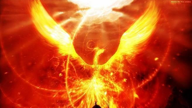 hd wallpapers phoenix bird pictures phoenix bird hd wallpapers 656x369