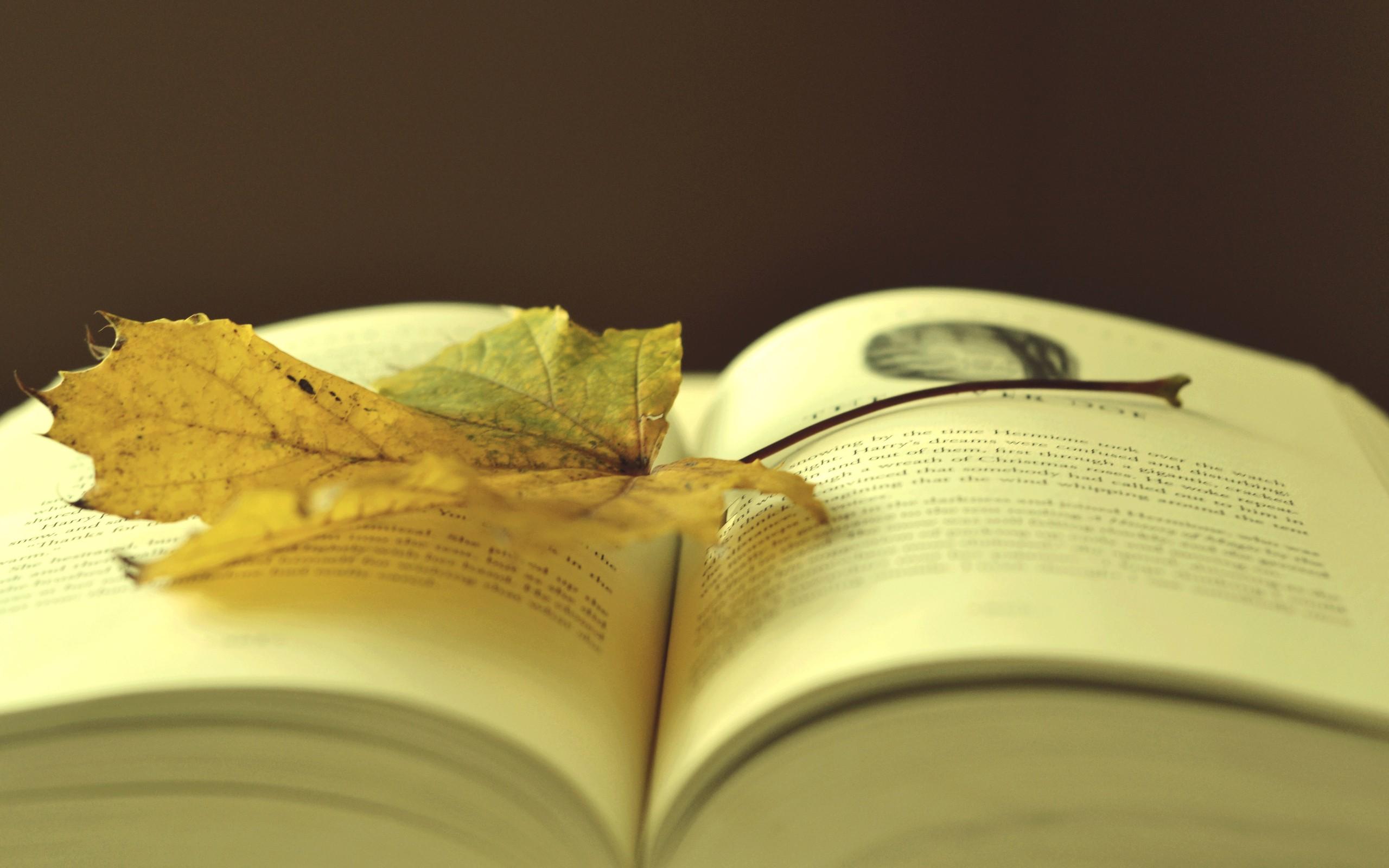Books Wallpaper 2560x1600 Books 2560x1600
