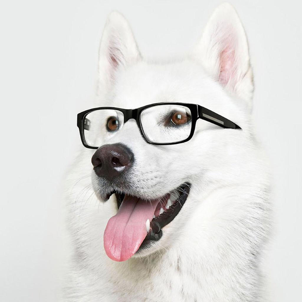 [42+] Animals With Glasses Wallpaper On WallpaperSafari