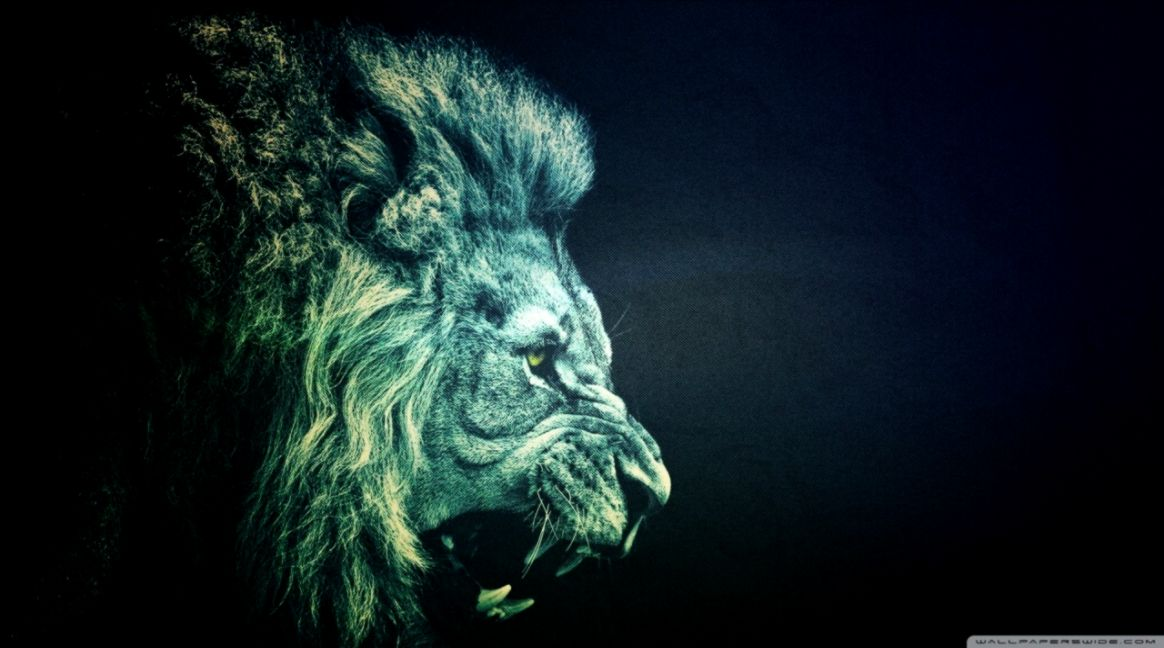 Free Download Lion Roar Wallpaper Hd Sizehd 1164x648 For Your