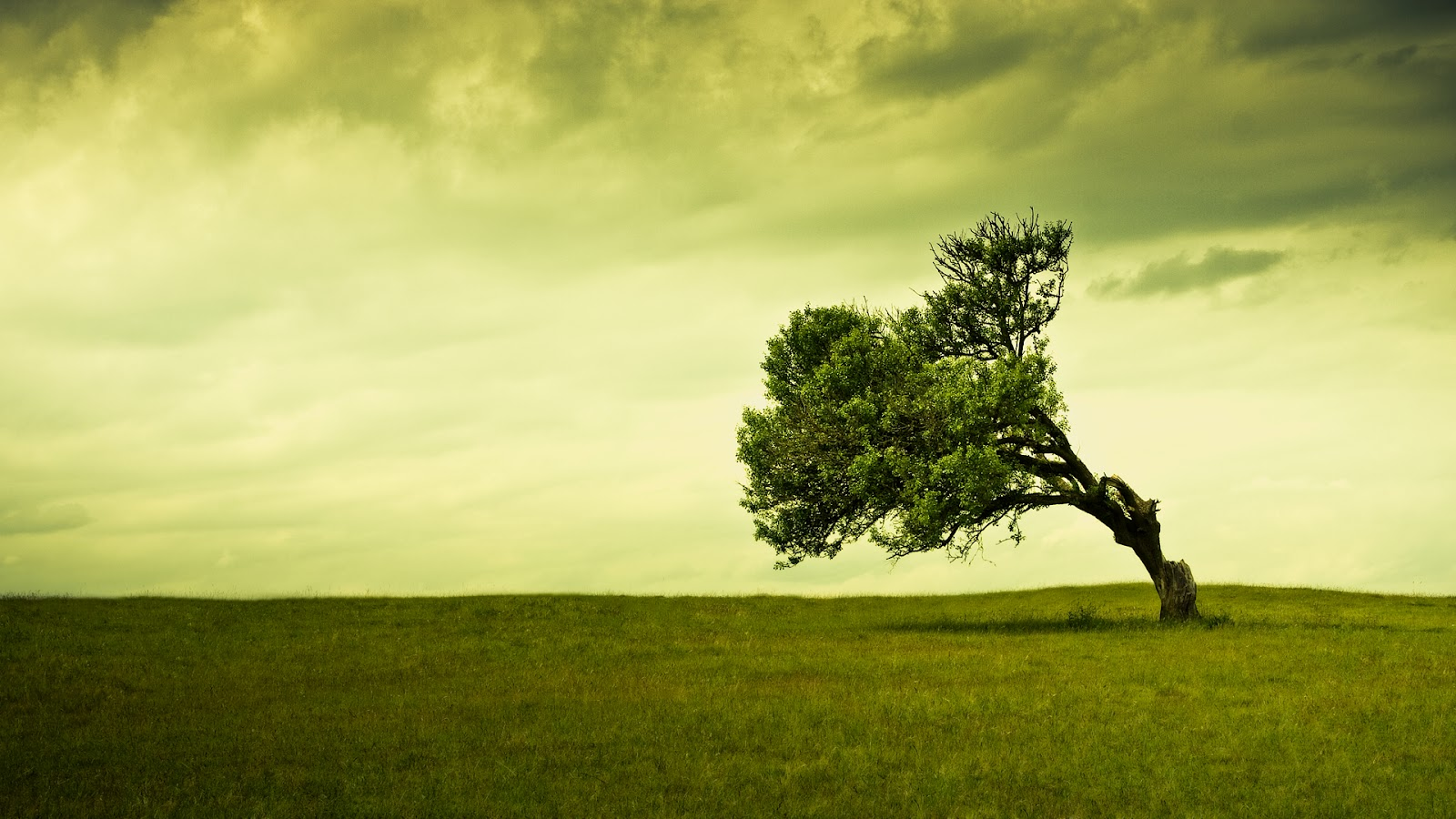 tree full HD nature background wallpaper for laptop widescreenjpg 1600x900