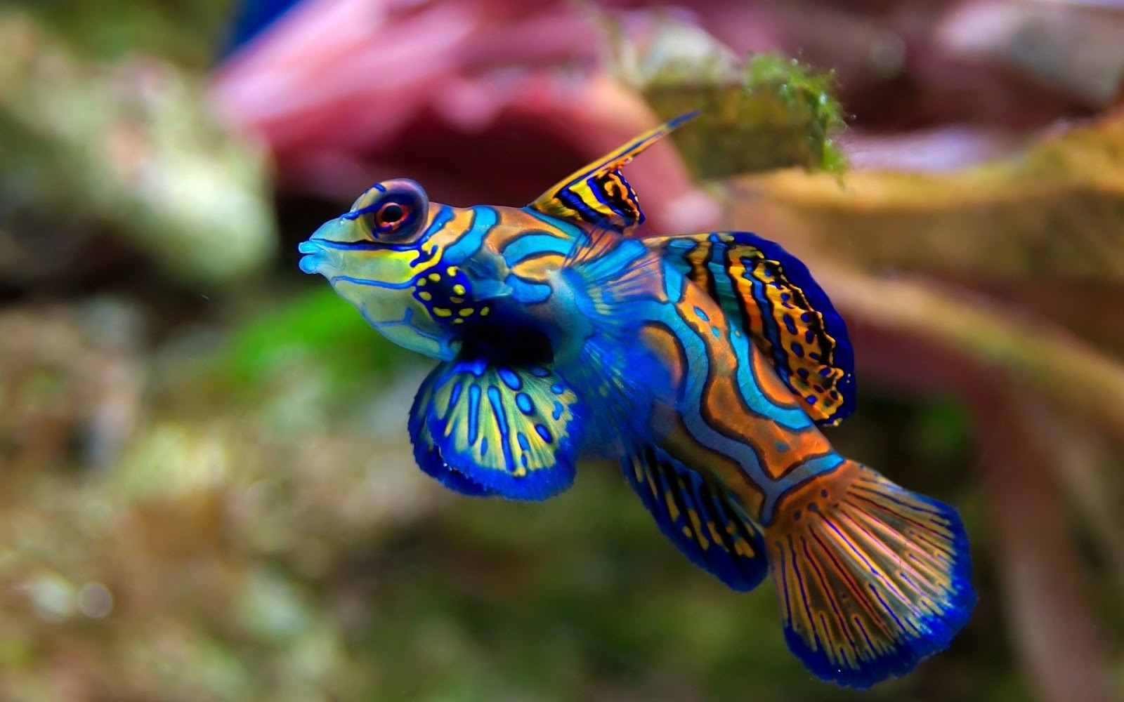 Unique Wallpaper Exotic Fish Wallpaper HD 1600x1000