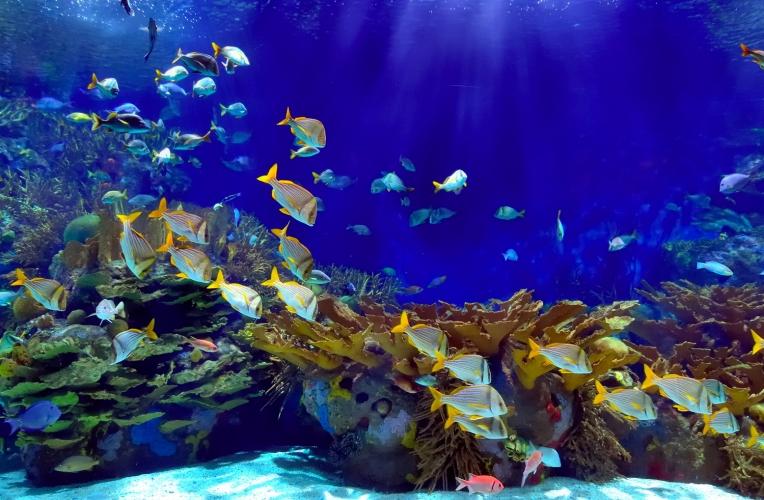 Deep Blue Underwater Wallpaper Wall Mural MuralsWallpapercouk 764x500